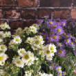 floralgallery/aster.jpg
