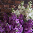 floralgallery/stock.jpg