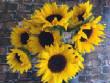 floralgallery/sunflower.jpg