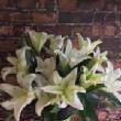 floralgallery/whitelily.jpg